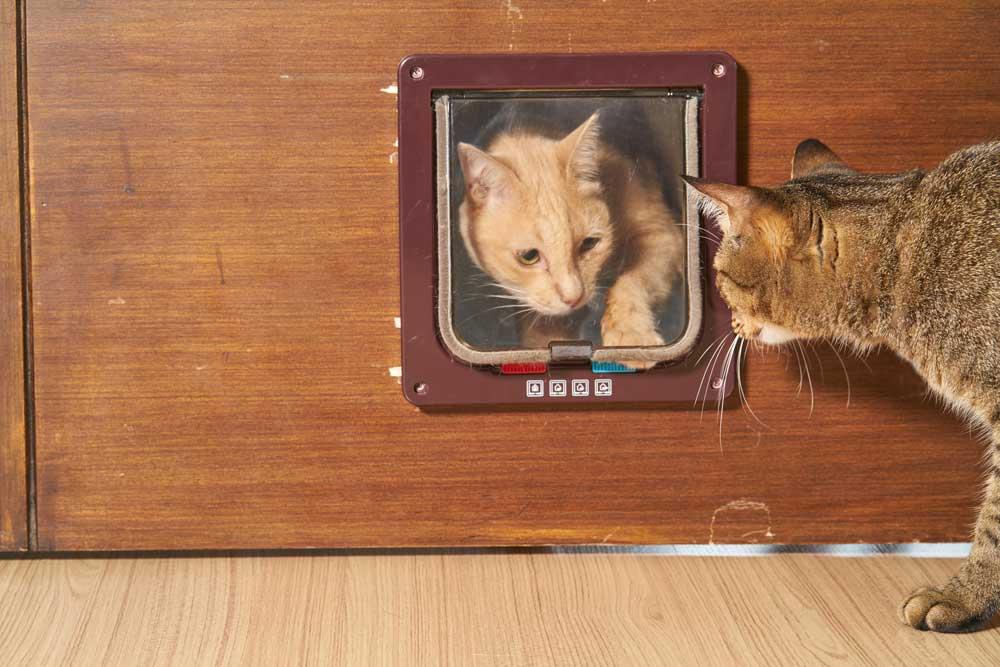 Katze mit Artgenossen an Katzenklappe gewöhnen