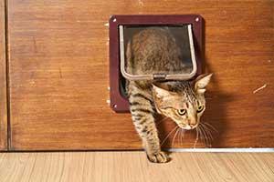 Vorteile Katzenklappe