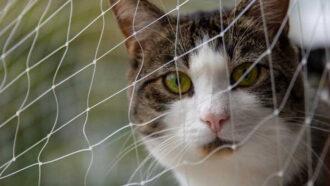 Warum du ein Katzennetz für deinen Balkon brauchst