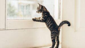 Das Kippfenster ist eine Gefahr für Katzen.