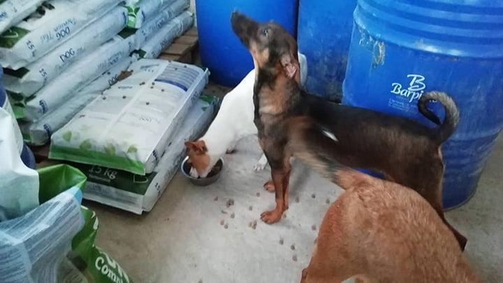 Spendenankunft Spenden-Marathon für Tiere 2018 pro Hund andaluz e.V. 1