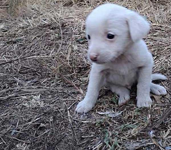 welpen-kitten-alarm-aktionsbild-welpe