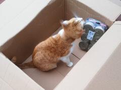 Spendenankunft_Wir fürs Tier im Mühlenkreis e.V. 4