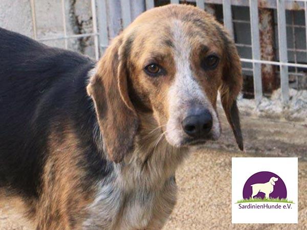 toedliches-sommerloch-Vereine-sardinienhunde