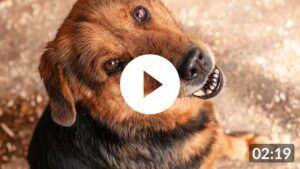 Tierschutz-Shop feiert seinen 5. Geburtstag