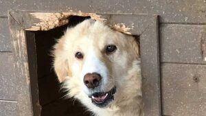 Hilfe im Notfall für Pro Animals Deutschland e.V. Mai 2019