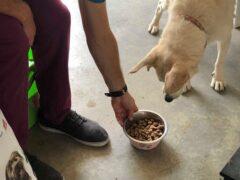 Tierheimhund bekommt einen vollen Napf mit Futter gereicht.