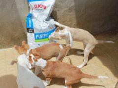 Spendenankunft_Tierschutzverein Familienanschluss-gesucht e.V. - Tierhschutz in Portugal - Welpen und Kitten Alarm 1