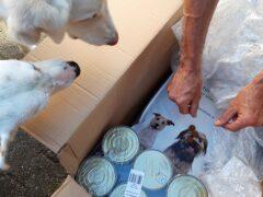 Spendenankunft_Tierschutzverein Tierparlament e.V. Im Namen aller Tiere 4