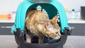 Katze eingewöhnen - so machst du es richtig