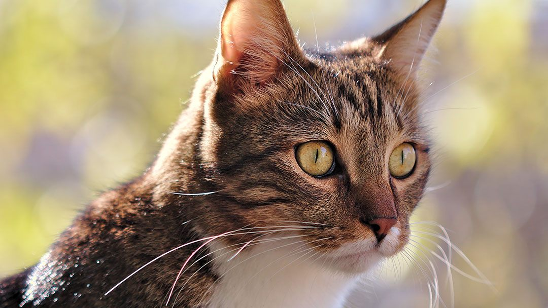 Eingewöhnung einer neuen Katze Freigang