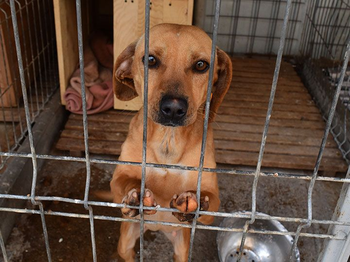sos-hilferuf-rumaenien-hund-im-shelter