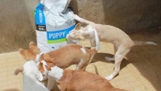 Spendenankunft Welpen-und-Kitten