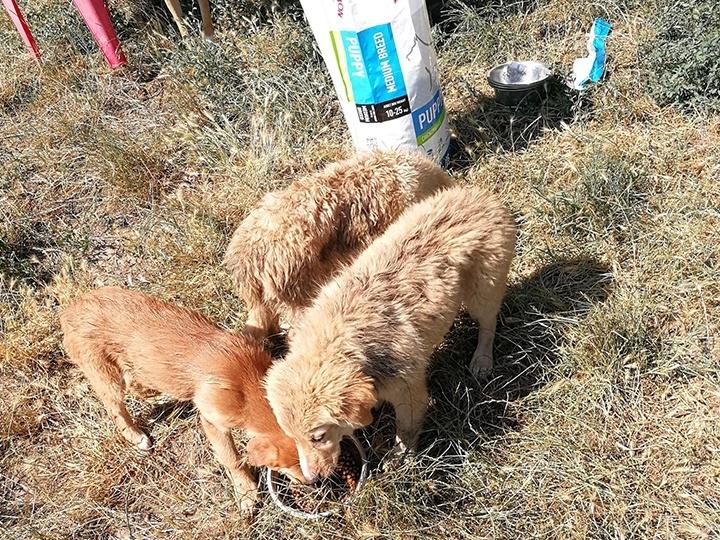 Engel der Hunde e.V. - Futterspendenankunft-Juli-2019 - WL 3