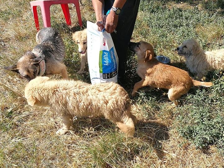 Engel der Hunde e.V. - Futterspendenankunft-Juli-2019 - WL 4