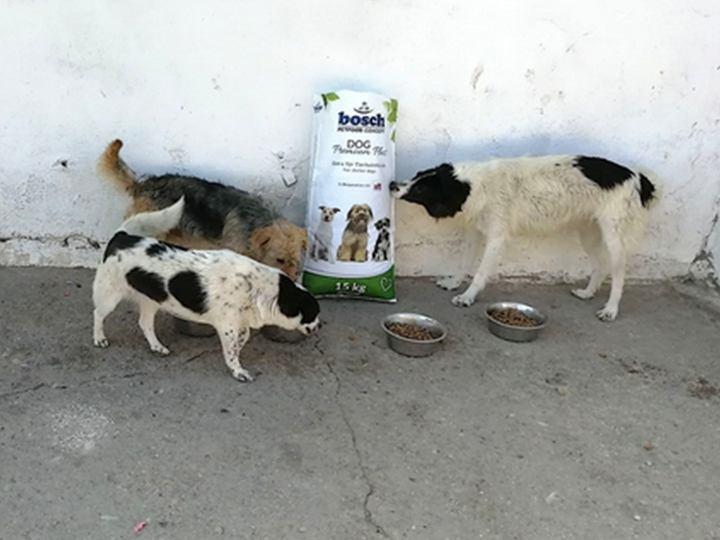 Engel der Hunde e.V. - Futterspendenankunft-Juli-2019 - WL 5