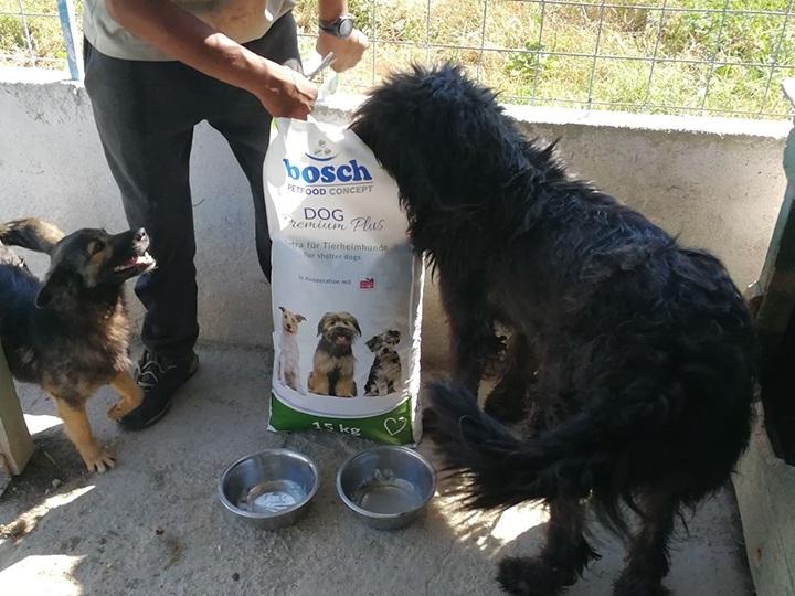 Engel der Hunde e.V. - Futterspendenankunft-Juli-2019 - WL 6