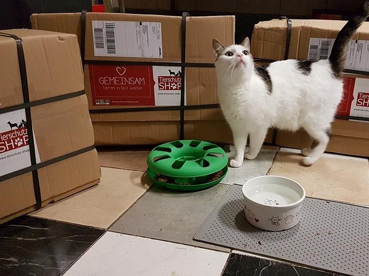 Katzschutzverein Wolgast e.V. - Futterspendenankunft-Juli-2019 - WL 2