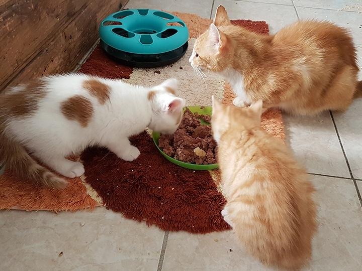 Katzschutzverein Wolgast e.V. - Futterspendenankunft-Juli-2019 - WL 3