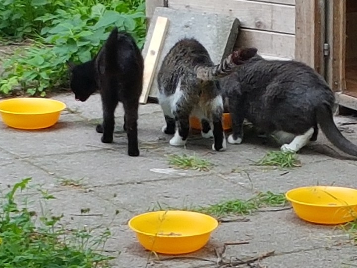Katzschutzverein Wolgast e.V. - Futterspendenankunft-Juli-2019 - WL 4