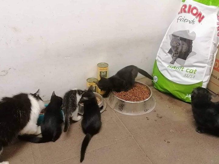 Tierhilfe Pfotentraum e.V.-Futterspendenankunft-Juli-2019-Spendenaktion WuK-Alarm-Ungarn4