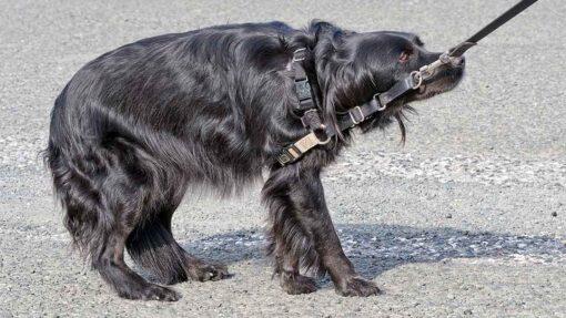 Angst vorm Spaziergang beim Hund