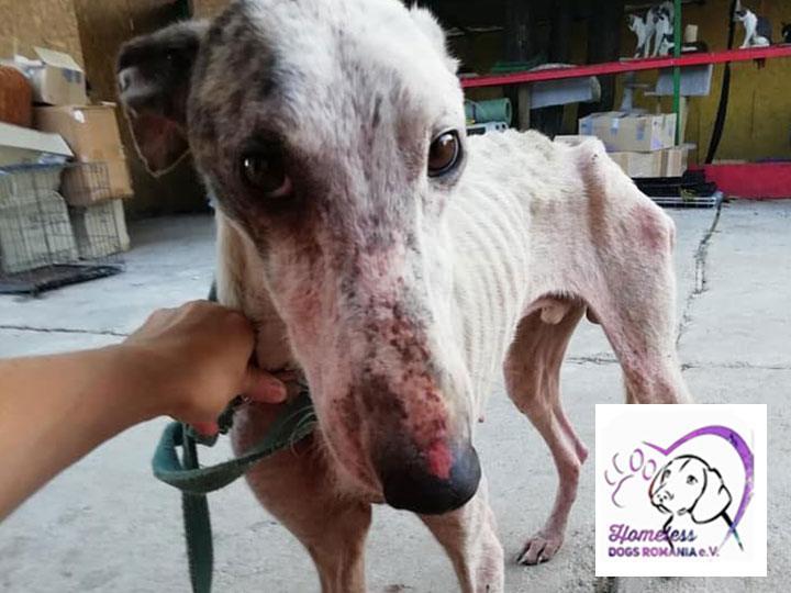 sos-hilferuf-vereine-homeless-dogs-romania