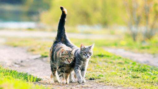 Was du beachten musst, wenn deine Katze rollig ist.