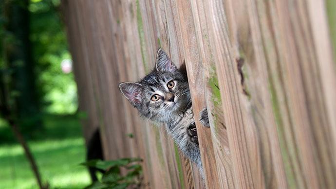 Katze schaut durch den Gartenzaun in Nachbars Garten