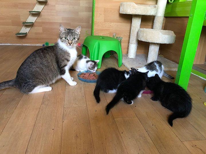 Katzen in Not e.V. -Futterspendenankunft-september 2019-WL-Deutschland (2)