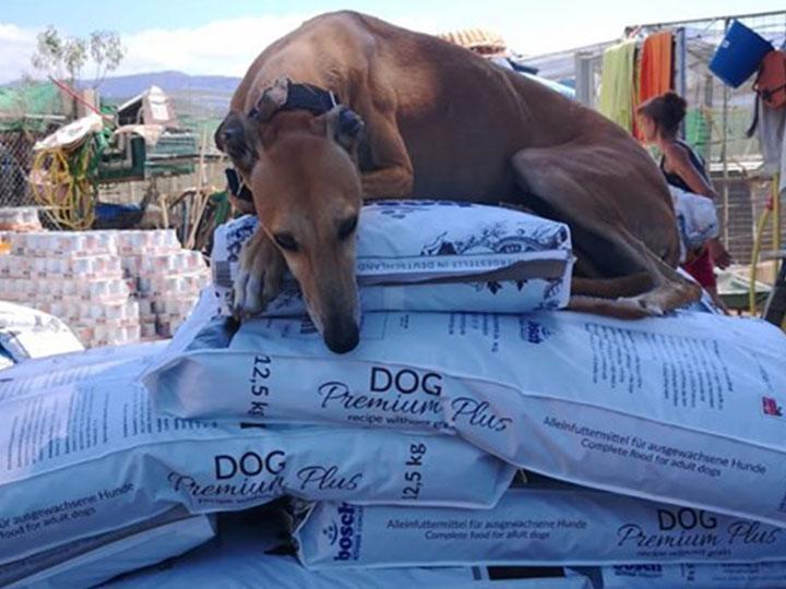 Silencio e.V.-Futterspendenankunft-september 2019-Spendenaktion-Sommerloch-Spanien(3)