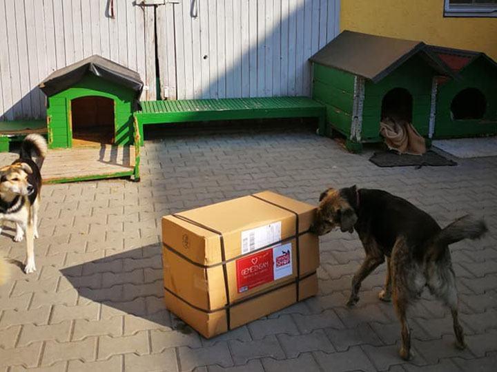 Streunerhilfe Rudelstetten e.V.-Futterspendenankunft-september 2019-WL-Deutschland (2)