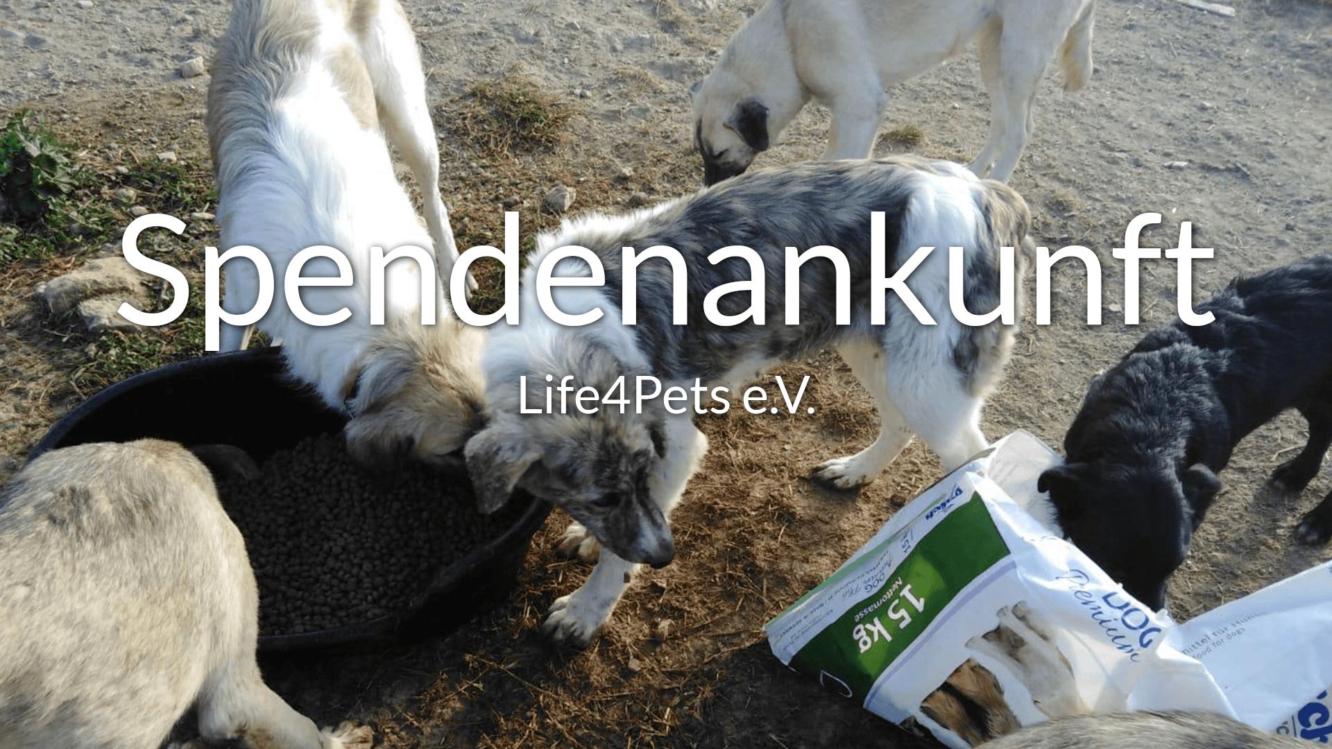 Thumbnail-Life4Pets e.V.-Futterspendenankunft-September-2019-ThdM-Rumänien-VIDEO-1