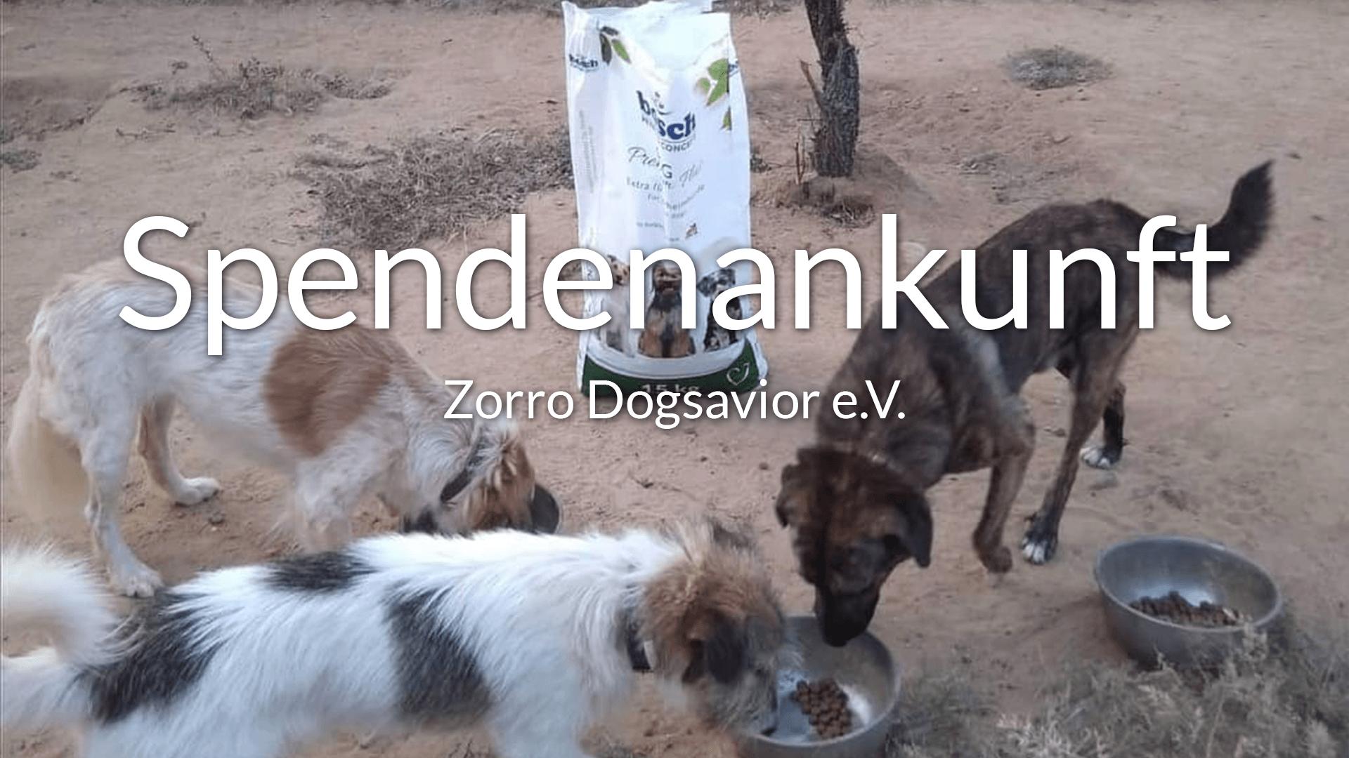 Thumbnail-Zorro-Dogsavior-e.V.-Futterspendenankunft-September-2019-Sommerloch-Griechenland-VIDEO1