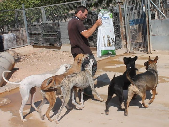 Tierhilfe Phönix e.V.-Futterspendenankunft-september 2019-Spendenaktion-Sommerloch-Spanien (1)