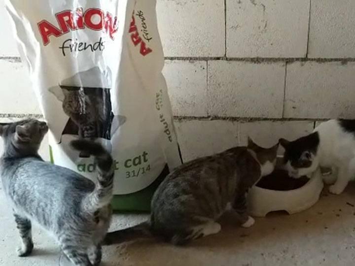Tierhilfe Phönix e.V.-Futterspendenankunft-september 2019-Spendenaktion-Sommerloch-Spanien (2)