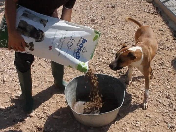 Tierhilfe Phönix e.V.-Futterspendenankunft-september 2019-Spendenaktion-Sommerloch-Spanien (3)