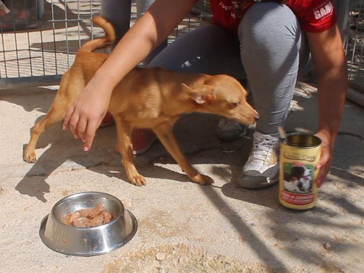 Tierhilfe Phönix e.V.-Futterspendenankunft-september 2019-Spendenaktion-Sommerloch-Spanien (4)