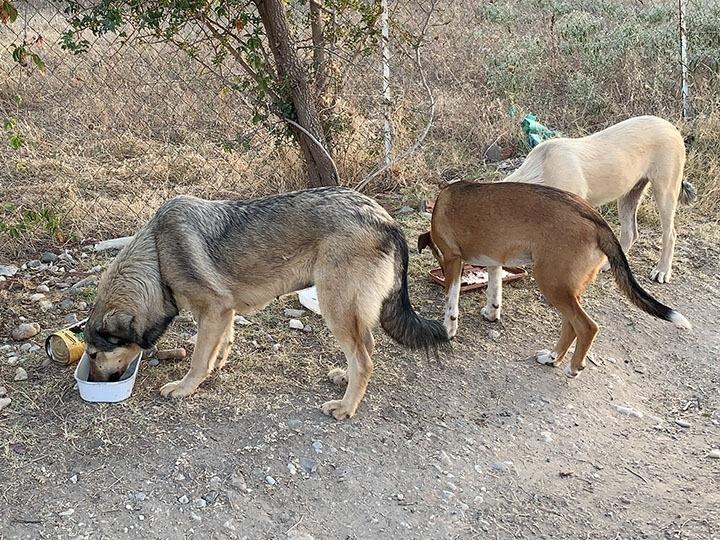 Zenias Tiere e.V.-Futterspendenankunft-september-2019-Spendenaktion-Sommerloch-Griechenland-(4)