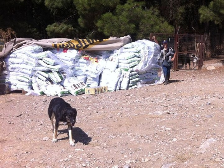 Zorro Dogsavior e.V.-Futterspendenankunft-september-2019-Spendenaktion-Sommerloch-Griechenland-(2)