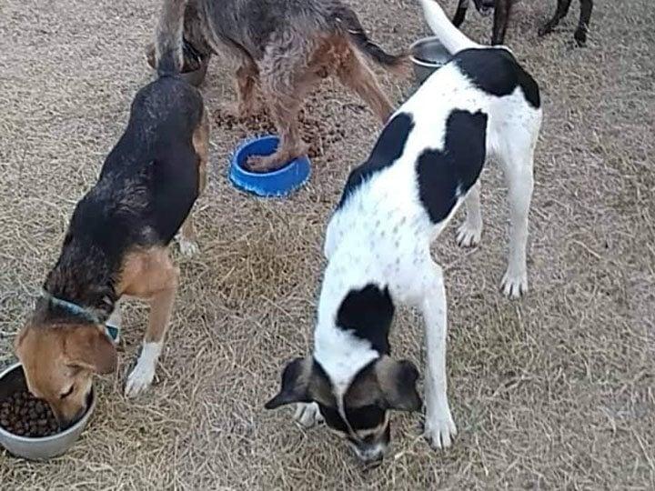 Zorro Dogsavior e.V. -Futterspendenankunft-september 2019-Spendenaktion-Sommerloch-Griechenland (3)