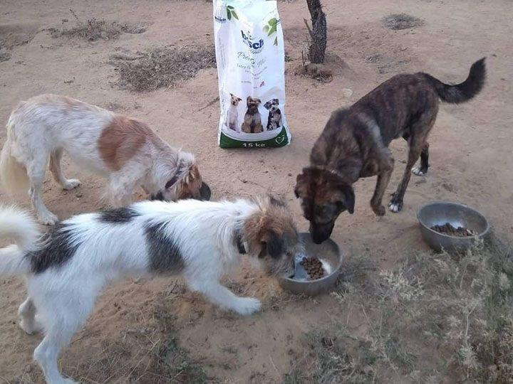 Zorro Dogsavior e.V. -Futterspendenankunft-september 2019-Spendenaktion-Sommerloch-Griechenland (4)