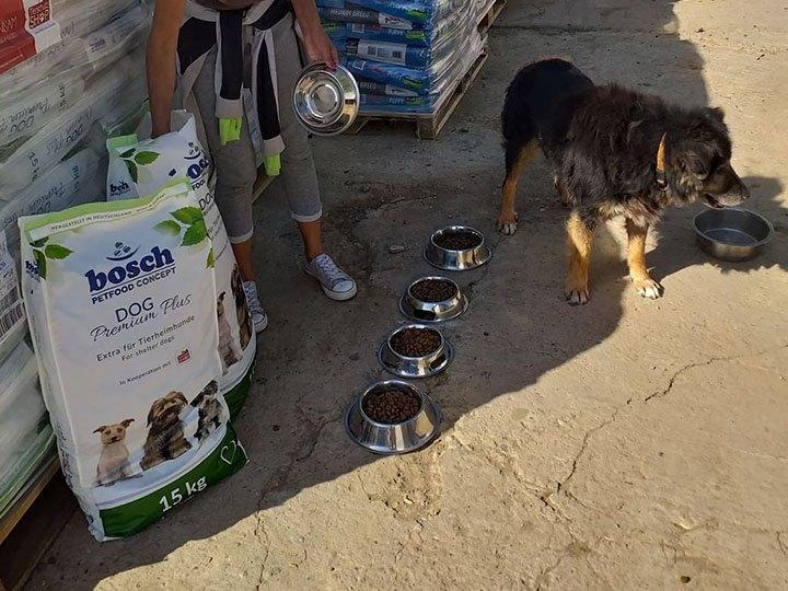Animal Hope & Liberty e.V. -Futterspendenankunft-oktober 2019-Notfall-WL-Rumänien (1)