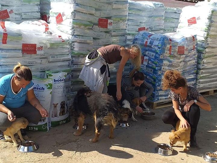 Animal Hope & Liberty e.V. -Futterspendenankunft-oktober 2019-Notfall-WL-Rumänien (2)