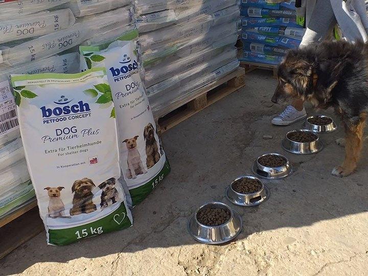 Animal Hope & Liberty e.V. -Futterspendenankunft-oktober 2019-Notfall-WL-Rumänien (3)