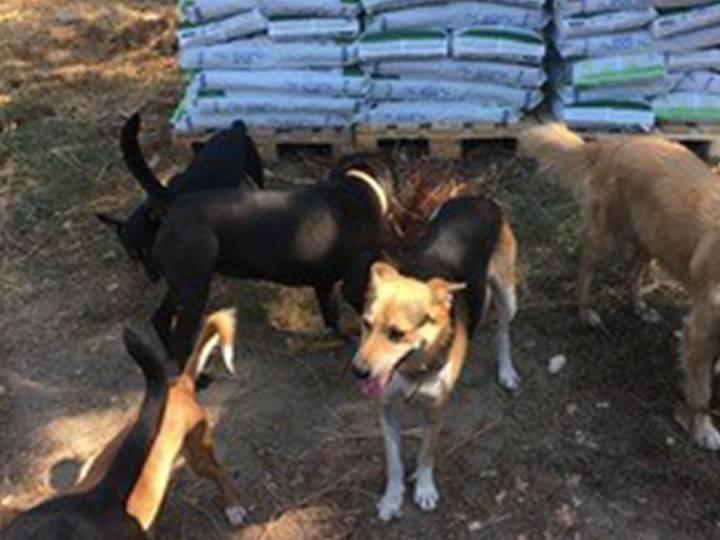 FOS Thassos e. V.-Futterspendenankunft-oktober-2019-WL-Griechenland (3)