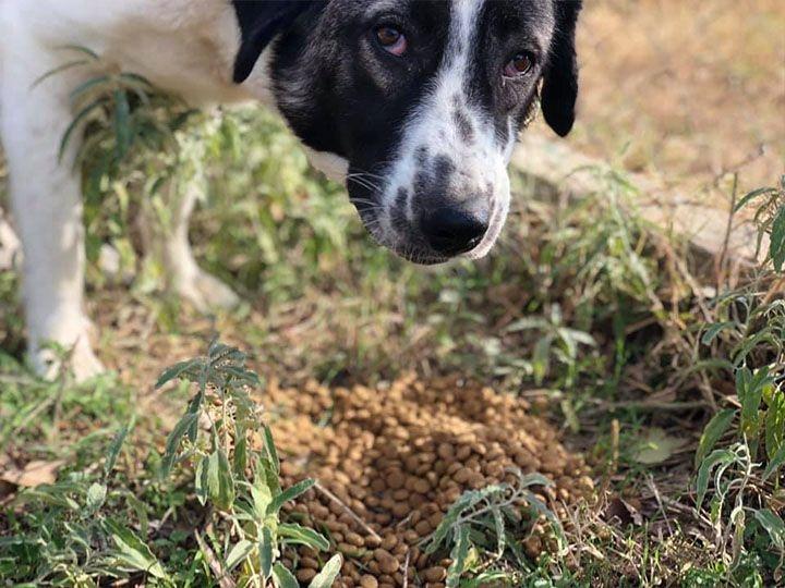 Save the dogs in Kallikratia e.V.-Futterspendenankunft-oktober 2019-WL-Griechenland (3)