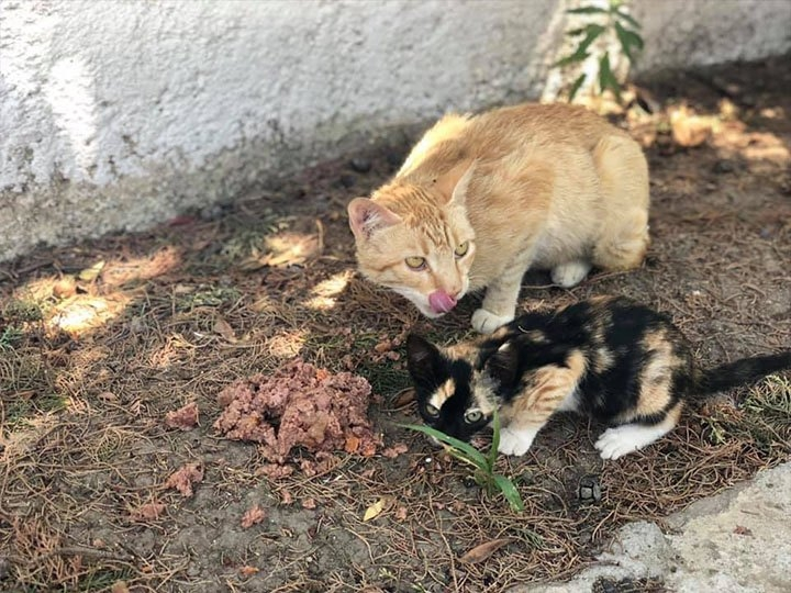 Save the dogs in Kallikratia e.V.-Futterspendenankunft-oktober 2019-WL-Griechenland (4)