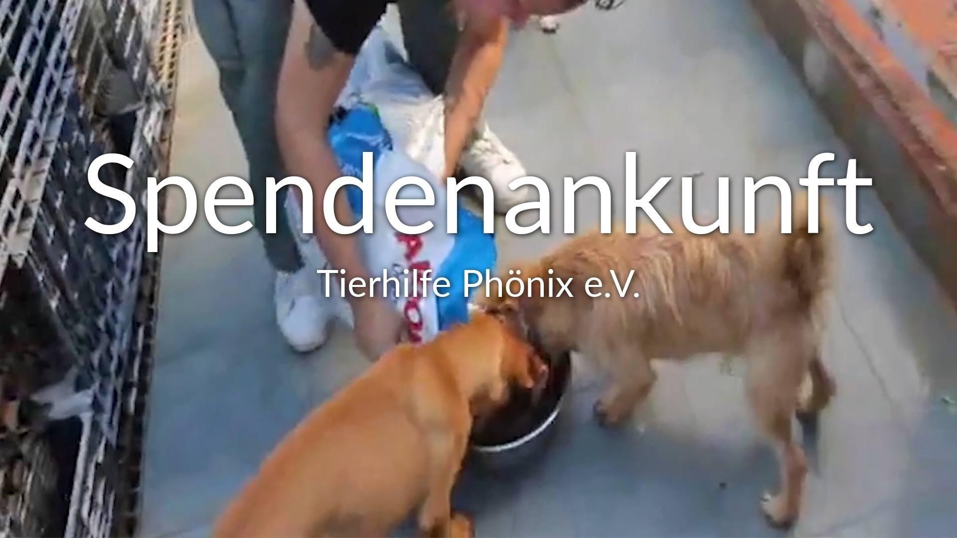 Tierhilfe Phönix e.V.-Futterspendenankunft-oktober 2019-WL-Spanien (1)