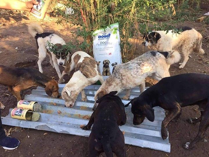 Zenias Tiere e.V.-Futterspendenankunft-oktober-2019-Spendenaktion-Sommerloch-Griechenland-(3)